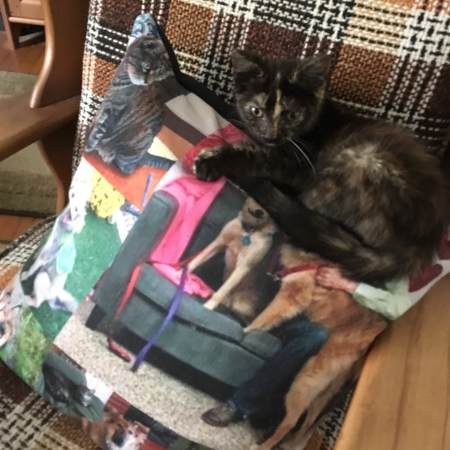 Tortoise-shell kitten sitting on a pillow with pictures of dogs and another cat.